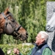The Irish Racehorse Experience