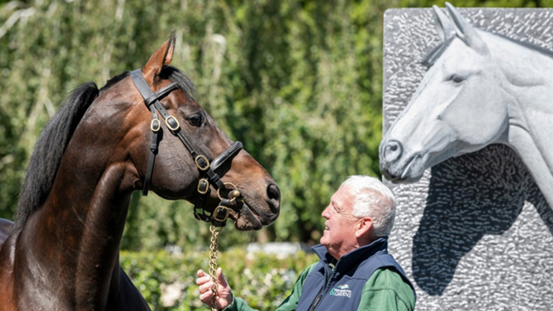 The Irish Racehorse Experience